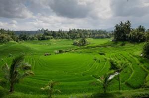 Terrazas de arroz en Japón