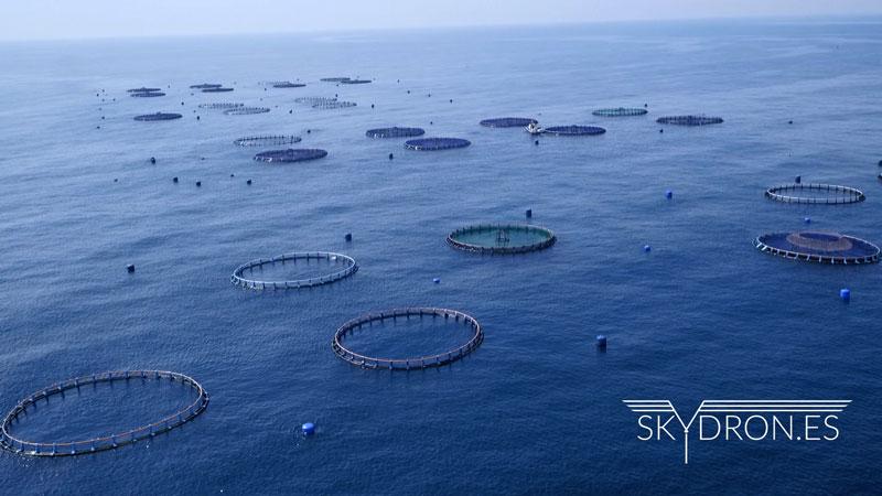 Drones al mar o grabando la piscifactoría de Burriana